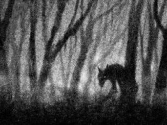Werewolf, Stalking